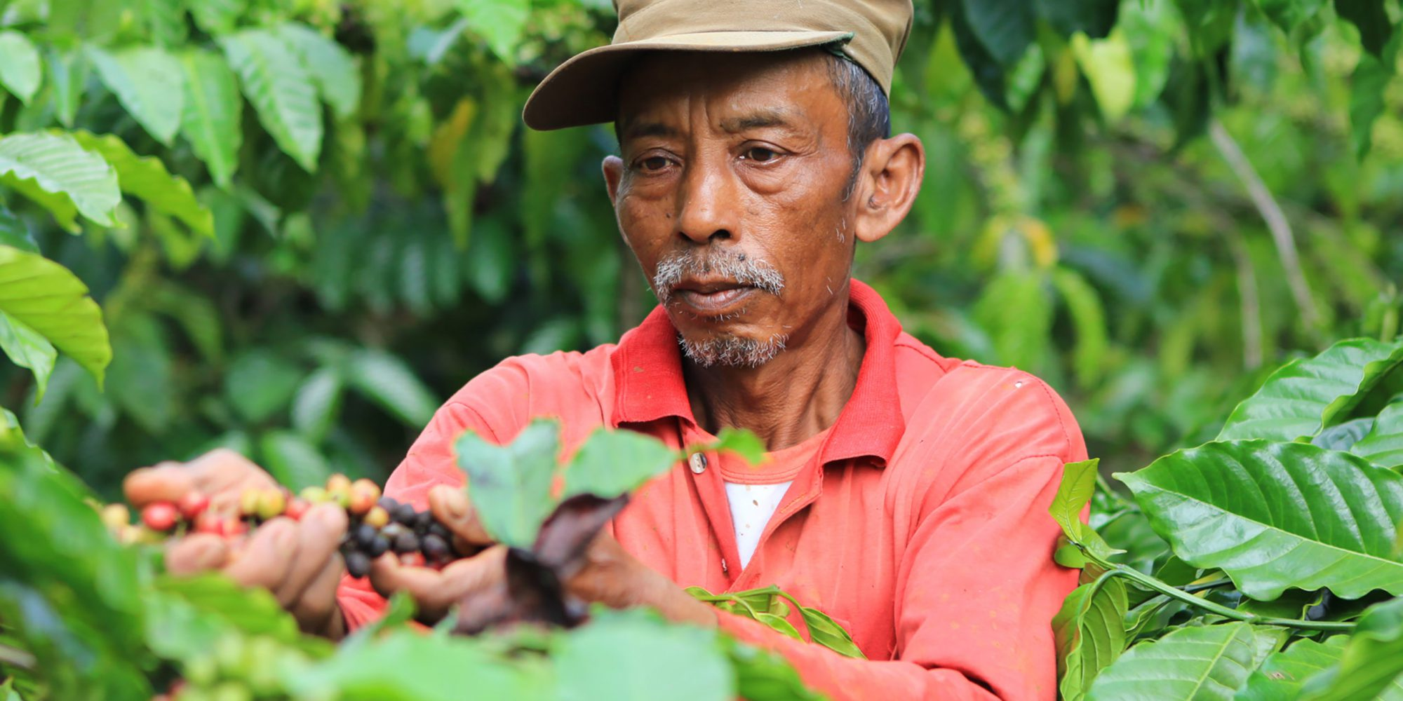 Coffee farmer in Ciremai Mountain, West Java